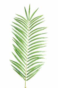Feuille artificielle de Palmier Phoenix Palm Spray H.60cm