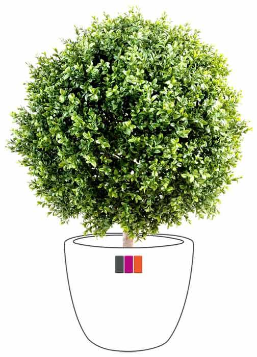 Buis boule 70cm for Plante arbuste exterieur
