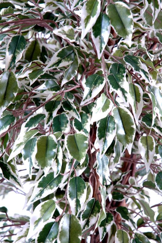 Arbre artificiel ficus lianes grandes feuilles plante d - Plante arbre interieur ...