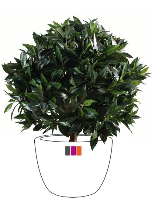 Plante artificielle laurier boule luxe plante for Plante boule artificielle