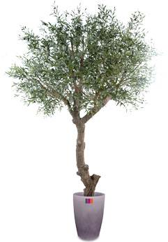 Arbre fruitier artificiel olivier t te g ant et olives for Arbre geant artificiel