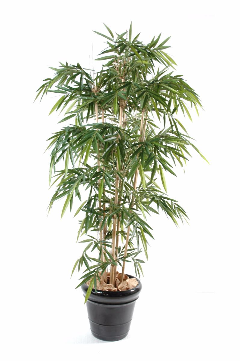 Bambou artificiel new uv r sistant 6 cannes int rieur for Plante bambou exterieur