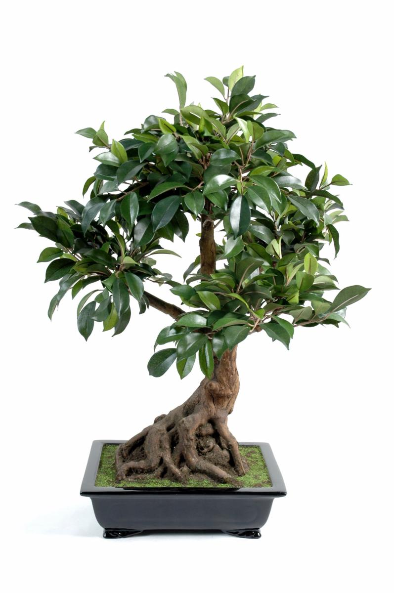 bonsa artificiel arbre miniature ficus en coupe plante d 39 int rieur cm. Black Bedroom Furniture Sets. Home Design Ideas