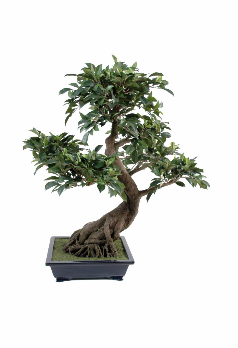 Bonsa artificiel arbre miniature ficus en coupe plante for Entretien bonsai interieur