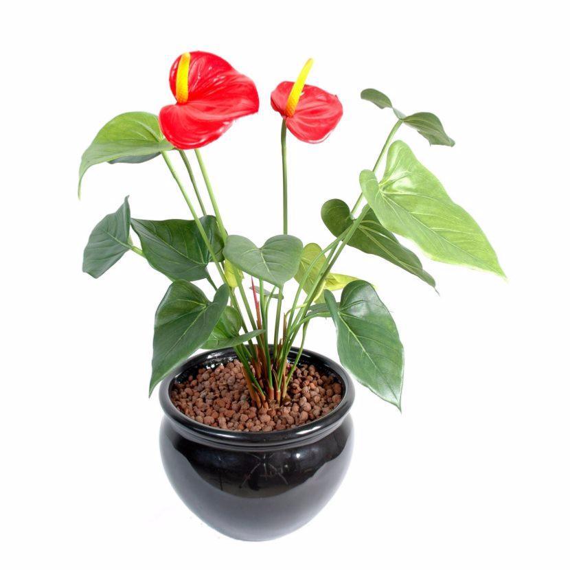 Fleur artificielle anthurium en piquet plante d 39 int rieur cm blanc for Plante 90 cm