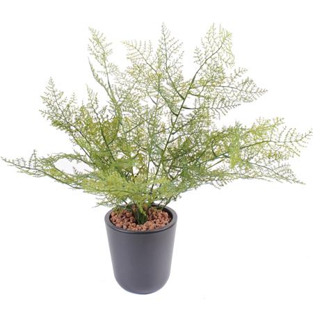 Plante artificielle asparagus plastique int rieur for Plante plastique exterieur
