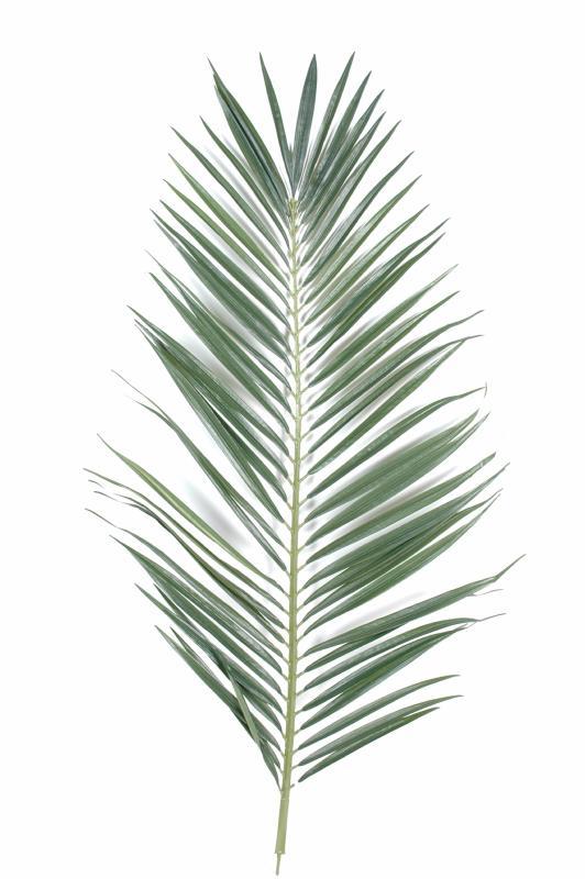 Feuille artificielle de palmier majesty palme cm - Feuille de palmier artificielle ...