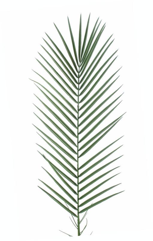 Feuille artificielle de palmier phoenix palme plastique - Feuille de palmier artificielle ...