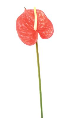 Fleur artificielle Anthurium - décoration florale - H. 58cm rouge