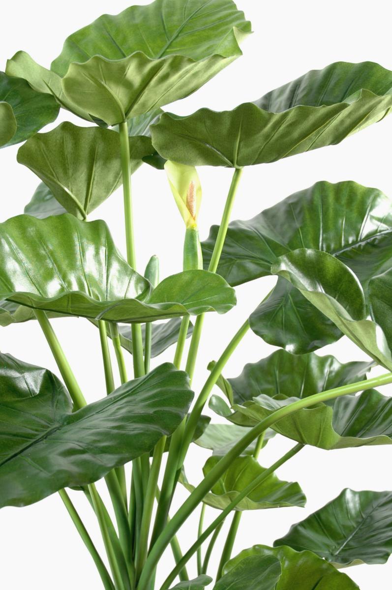 plante artificielle tropicale alocasia d coration d. Black Bedroom Furniture Sets. Home Design Ideas