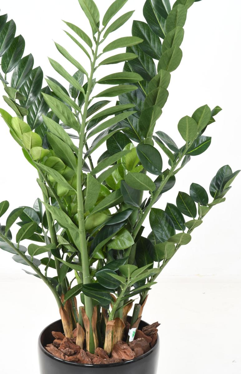 Plante artificielle verte zamioculcas d coration pour for Deco interieur plante verte