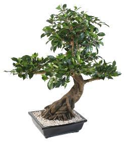 Arbre artificiel ficus tronc cage plante int rieure h for Buisson synthetique