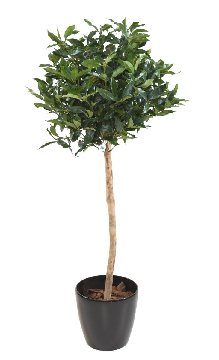 plante artificielle laurier lusitanica tige plante d. Black Bedroom Furniture Sets. Home Design Ideas