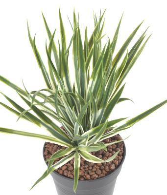 60cm artificielle en pot agave plant-intérieur//extérieur exotique plante tropicale