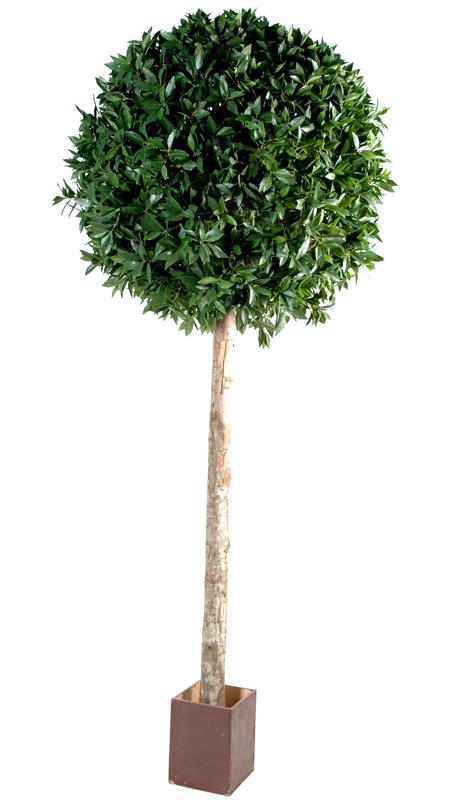 Plante artificielle laurier boule tige haut de gamme cm - Boule en verre pour plante ...