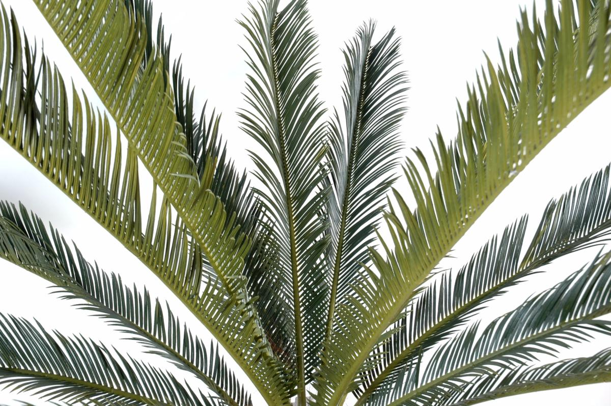 Palmier artificiel cycas g ant 15 palmes plante d for Palmiers artificiels
