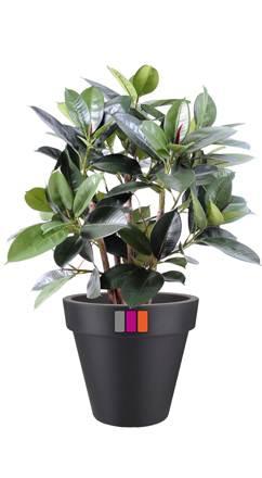 Arbre artificiel ficus elastica buisson plante for Buisson synthetique
