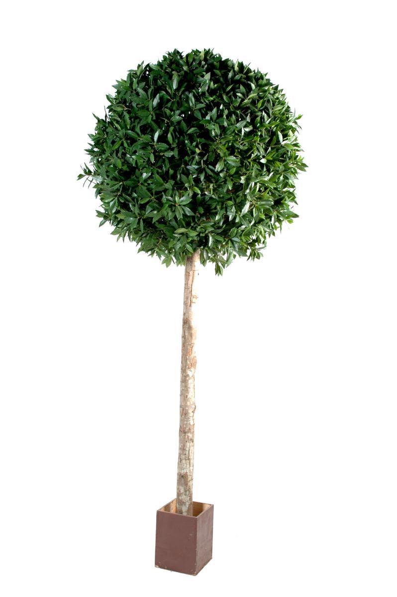 plante artificielle laurier boule tige haut de gamme h. Black Bedroom Furniture Sets. Home Design Ideas