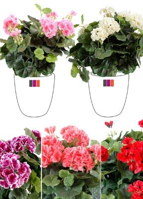 plante fleurie artificielle g ranium en piquet 35cm rose. Black Bedroom Furniture Sets. Home Design Ideas