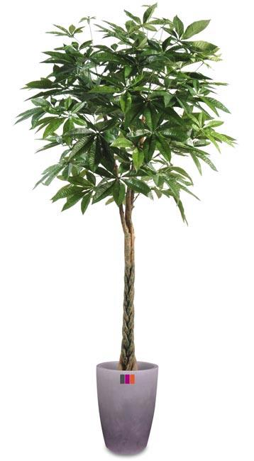 Plante artificielle pachira tress arbre pour int rieur for Plante arbre interieur