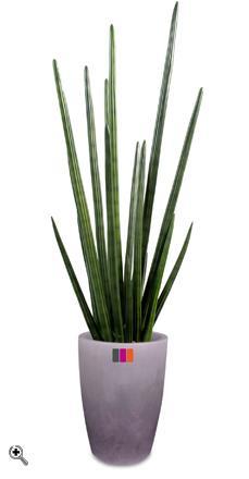 Plante artificielle sansevieria cylindrica d coration d 39 int rieur cm for Plante 90 cm