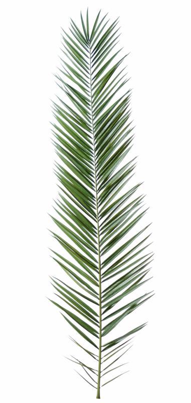 feuille artificielle de palmier phoenix canariensis palme cm. Black Bedroom Furniture Sets. Home Design Ideas