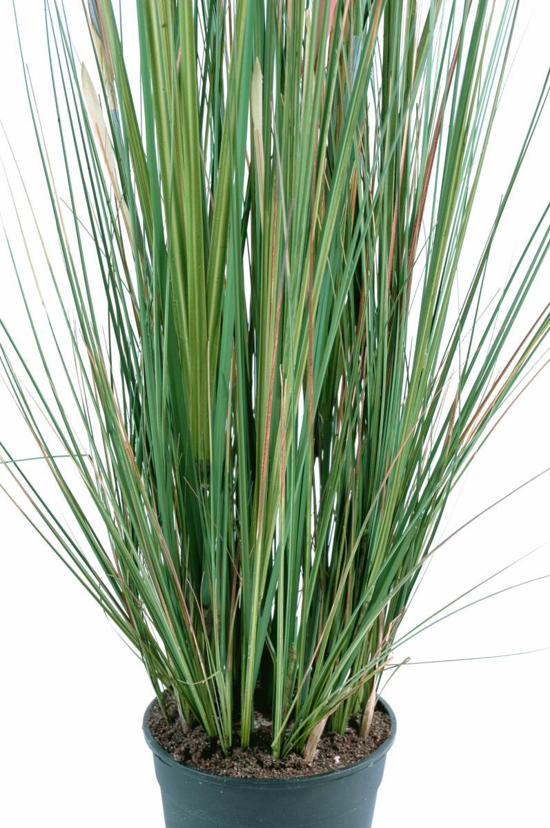 Plante artificielle gramin e zannichellie des marais en pot int rieur h 95 cm - Graminees en pot ...