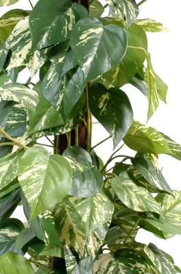 Des géraniums remorque 75cm rosa IG-artificielle pelargonium suspendu pelargonium art plantes
