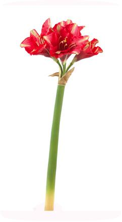 Fleur la tige amaryllis artificielle composition for Amaryllis exterieur
