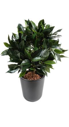 Plante artificielle Laurier boule luxe - plante synthétique - D.25 cm