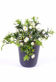Plantes topiaires artificielles ext rieur artificielflower for Plantes en plastique exterieur
