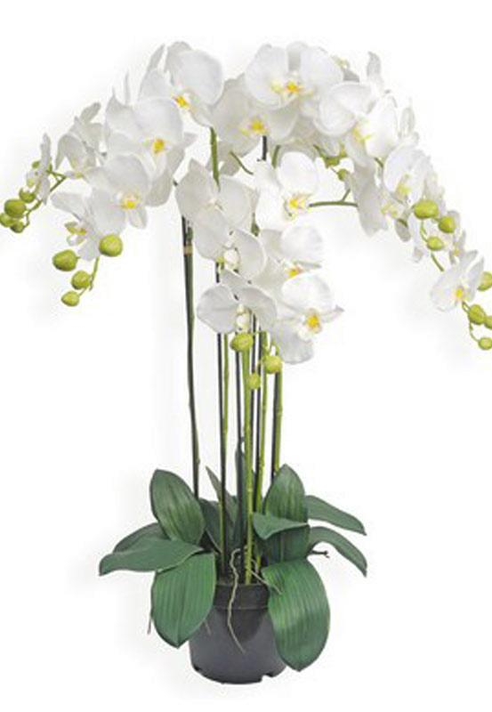 Fleurs en pot orchid e artificiel blanche 90cm for Orchidee exterieur