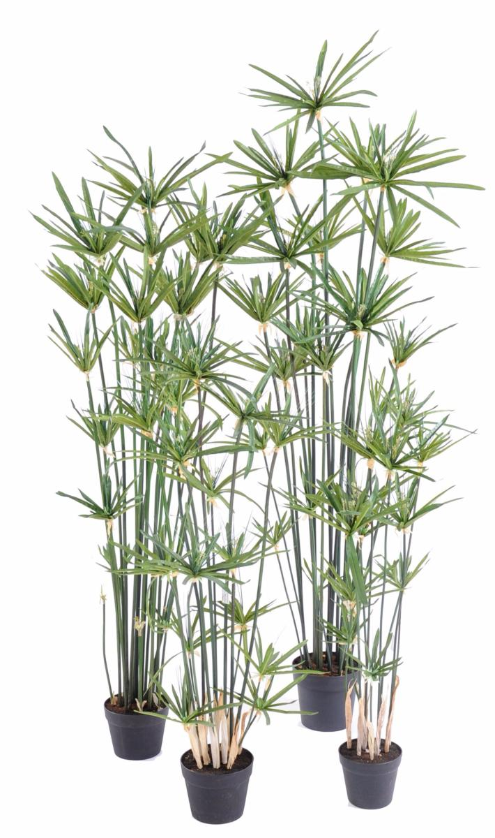 Plante artificielle papyrus alternifolius en pot for Plante arbre interieur