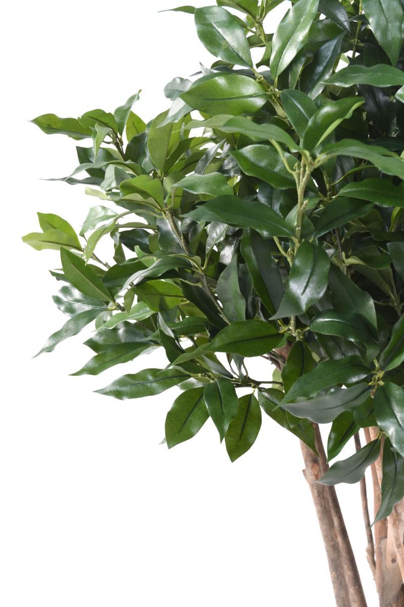 plante artificielle laurier lusitanica plante d. Black Bedroom Furniture Sets. Home Design Ideas