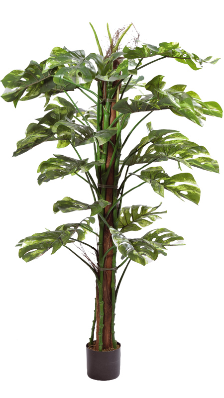 Plante artificielle tropicale monstera 150cm for Plante tropicale exterieur