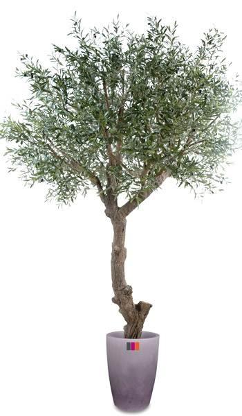 Arbre fruitier artificiel olivier t te g ant et olives for Arbre artificiel pour interieur