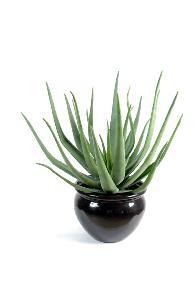 Plante Artificielle Aloe Vera En Pot Cactus Pour Intérieur