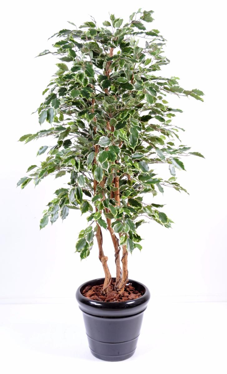 Arbre artificiel ficus exotica plante d 39 int rieur h for Arbres artificiels interieur