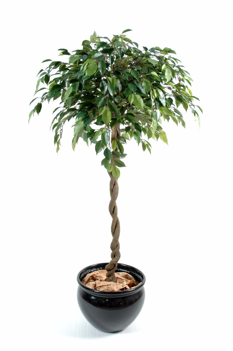 Arbre artificiel ficus boule natasja plante synth tique for Plante arbre interieur