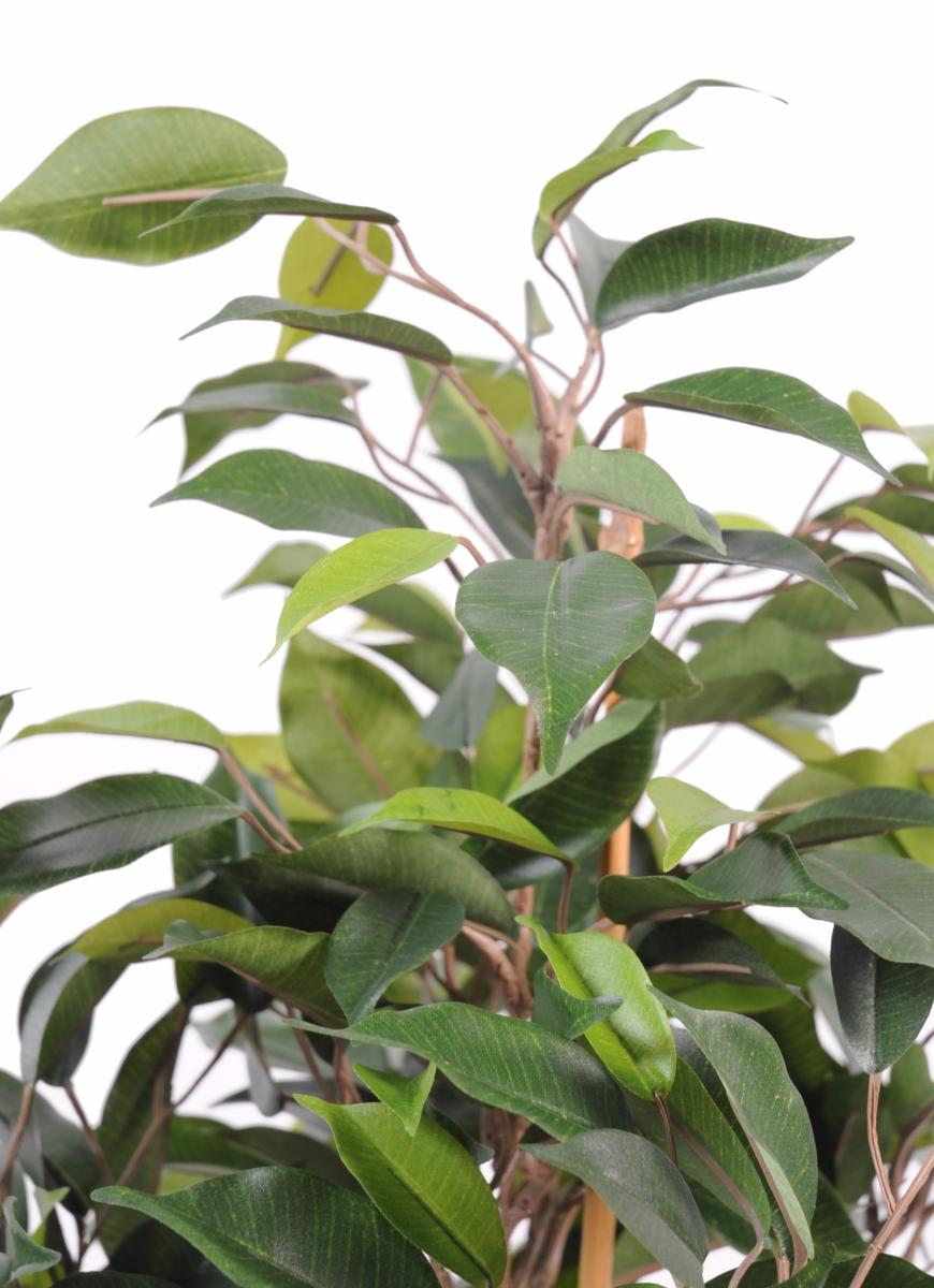 Arbre artificiel ficus natasja 5 t tes plante - Arbre artificiel interieur ...