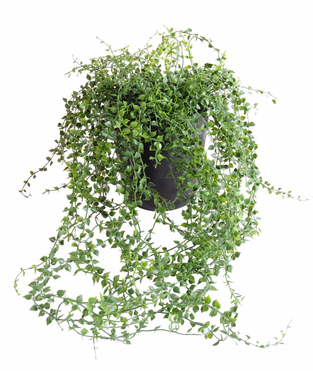 Plante artificielle callisia en pot interieur exterieur for Plante verte tombante interieur
