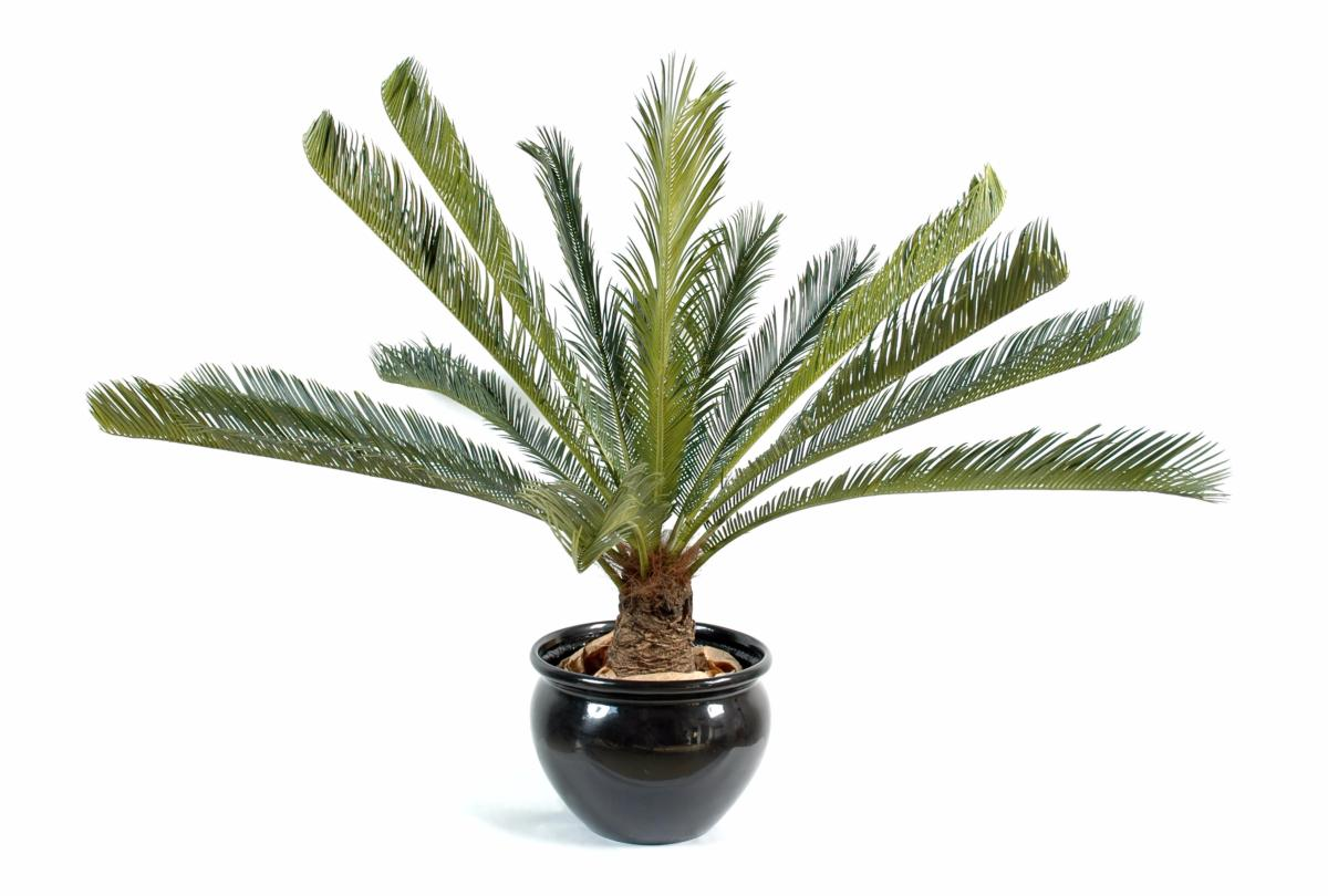 Palmier artificiel cycas g ant 15 palmes plante d - Plante verte palmier d interieur ...
