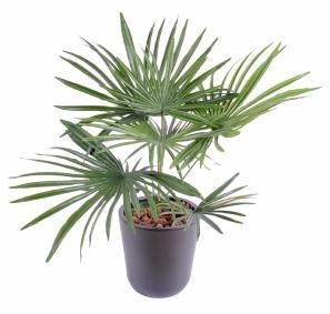 palmier artificiel cycas baby 10 feuilles int rieur ext rieur cm vert. Black Bedroom Furniture Sets. Home Design Ideas