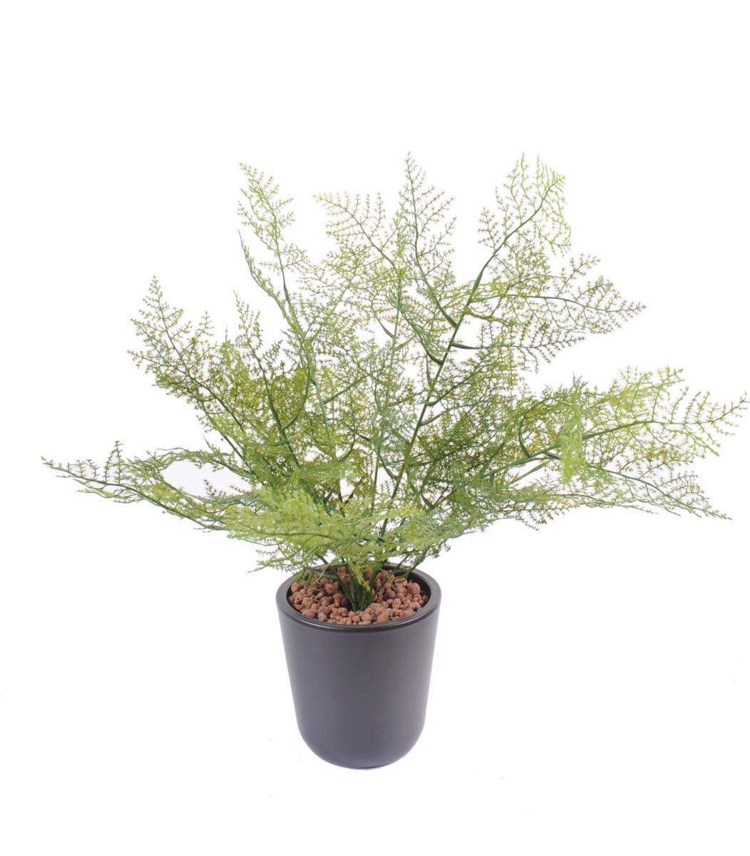 Plante artificielle asparagus plastique int rieur - Plantes de terrasse exterieur ...