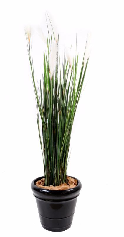 Plante artificielle gramin e carex vulpina natural for Plante contemporaine