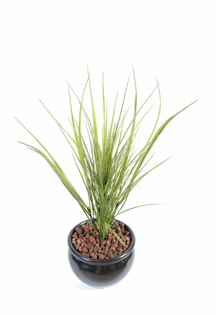 Plantes exterieur sans entretien cheap massif de yuccas for Plantes japonaises exterieur