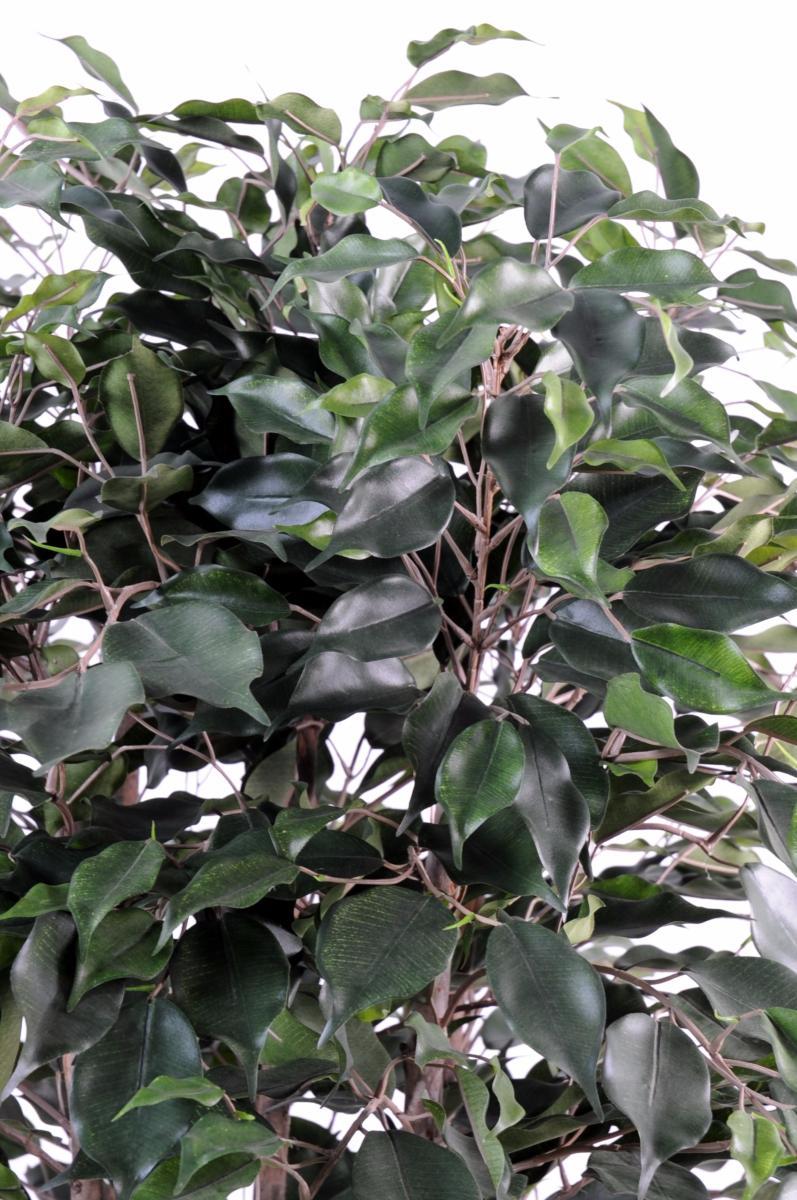 Arbuste artificiel ficus exotica buisson plante d - Plante arbre interieur ...