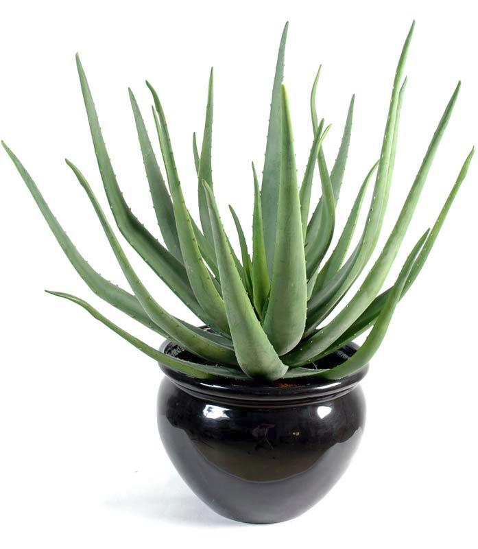Plante artificielle aloe vera en pot d coration d 39 int rieur cm - Aloe vera en pot ...