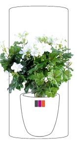 Fleur artificielle anthurium en piquet plante d for Geranium d interieur