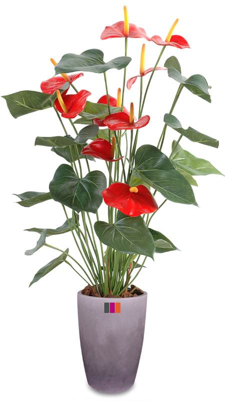 plante artificielle fleurie anthurium en pot plante d 39 int rieur rouge. Black Bedroom Furniture Sets. Home Design Ideas